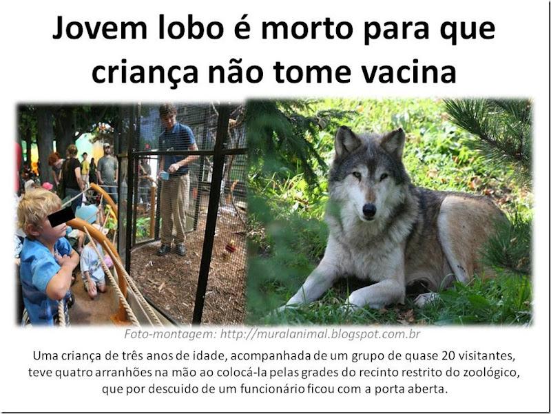 Jovem lobo é morto para que criança não