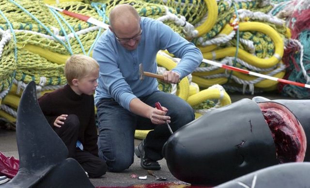 A Faroese man shows his son how to take out teeth from a whale's jaw in the harbour of Torshavn, Faroe Islands, 23 July 2010. Photo: Andrija Ilic / REUTERS