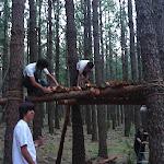 Casa en el árbol rover
