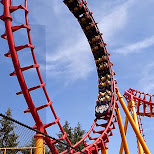 crazy rollercoasters at Canada's Wonderland - the bat in Vaughan, Ontario, Canada