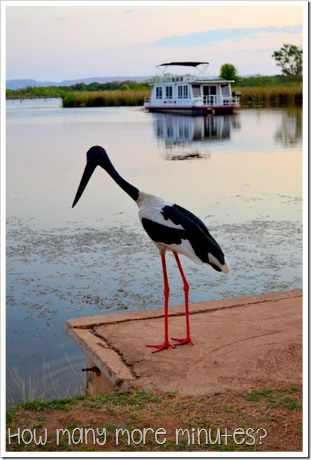 Kununurra: Crocs & a Jabiru | How Many More Minutes?
