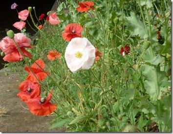 5 lock flowers