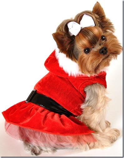 perro navidad (3)