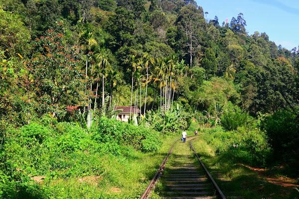 Горная железная дорога, Элла, Шри Ланка
