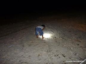 Amani hunting crabs