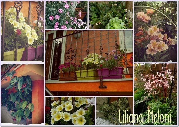 Meloni Liliana