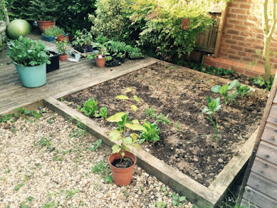 Vegetable Patch http://laura-honeybee.blogspot.com