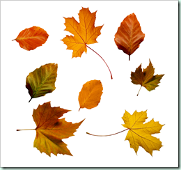 autumn_leaves_psd_by_atticresources-d6y6k77