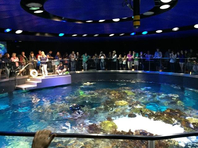 Traveling kate new england aquarium for Outdoor aquarium uk