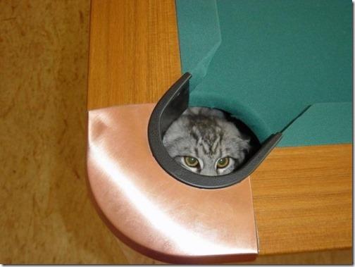 gatos sitios para esconderse (10)