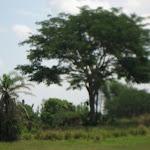 The Kilimanjaro Safari in Africa in the Animal Kingdom in Disney 06092011q