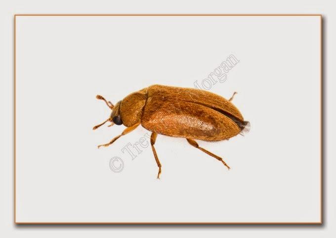 Bug 10 Rasp B