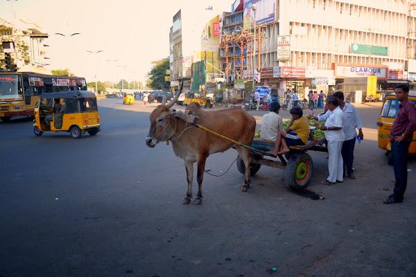 индия улица корова