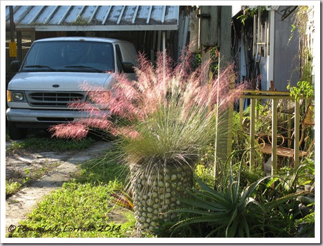 11-04-pink-muhly-7