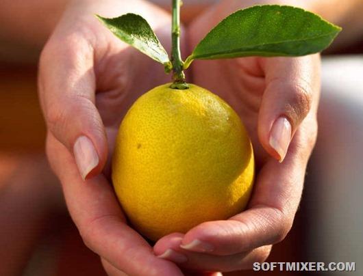 1340044779_limon7