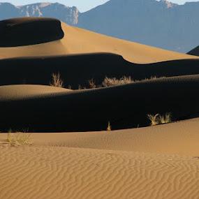 lovely scenery by Hamed Ghalandar - Landscapes Deserts ( iran, rig e jen desert )