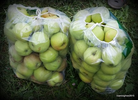 That's a lot of apples!
