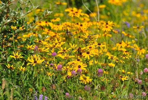 6. wildflowers in july-kab