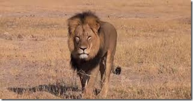 Leon Cecil images