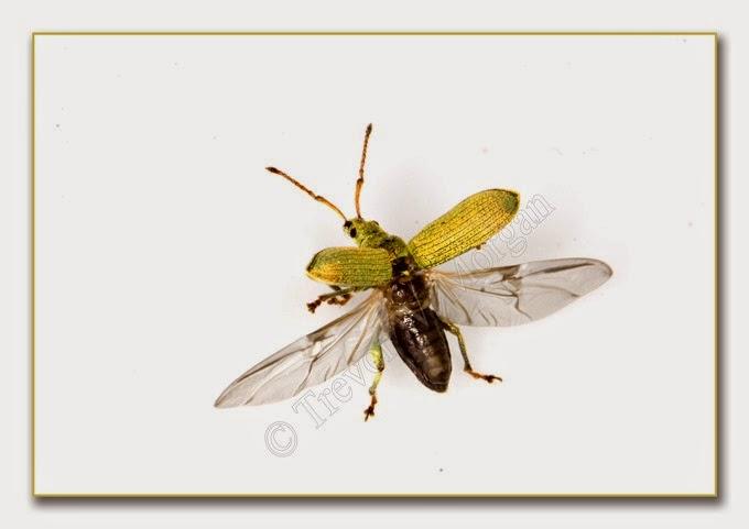 Bug 13 Net W