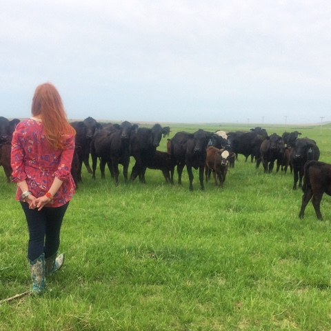 Red with cattle