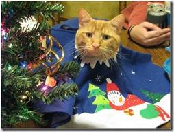 77- gatos navidad (4)- buscoimagenes