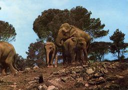 Estérel éléphants