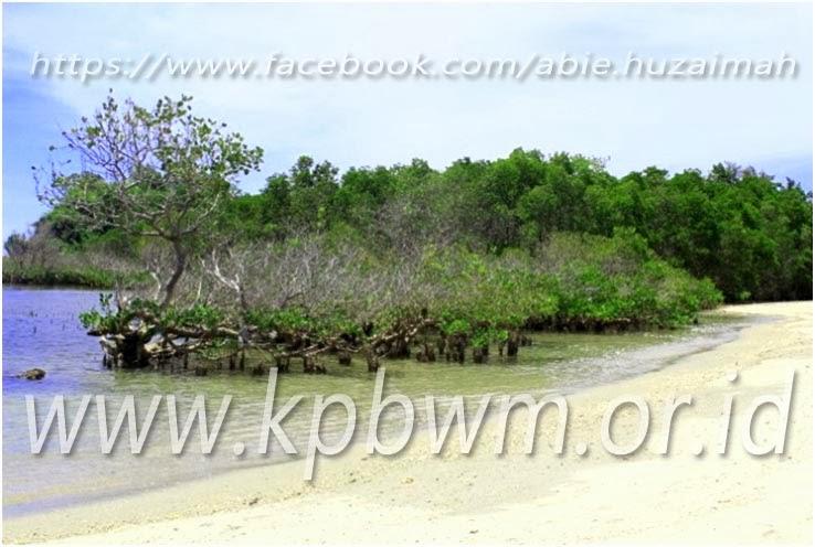 mangrove pantai taraujung pamboang