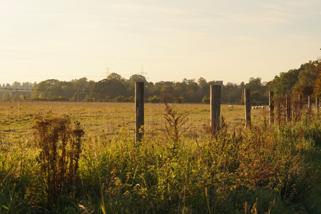 Autumn afternoon in Norfolk