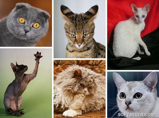 Секреты происхождения необычных котов