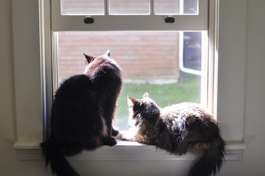 cats_in_window