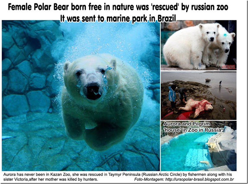 polar_bear_aurora