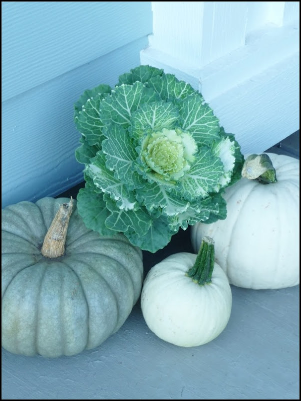 blue and white pumpkins with ornament cabbage (3)