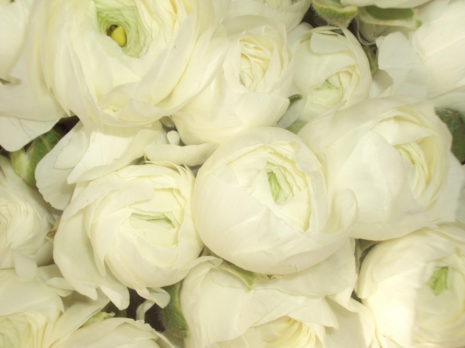 Hannah Moore Flowers