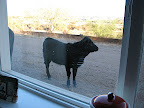 Cow visit 12/9