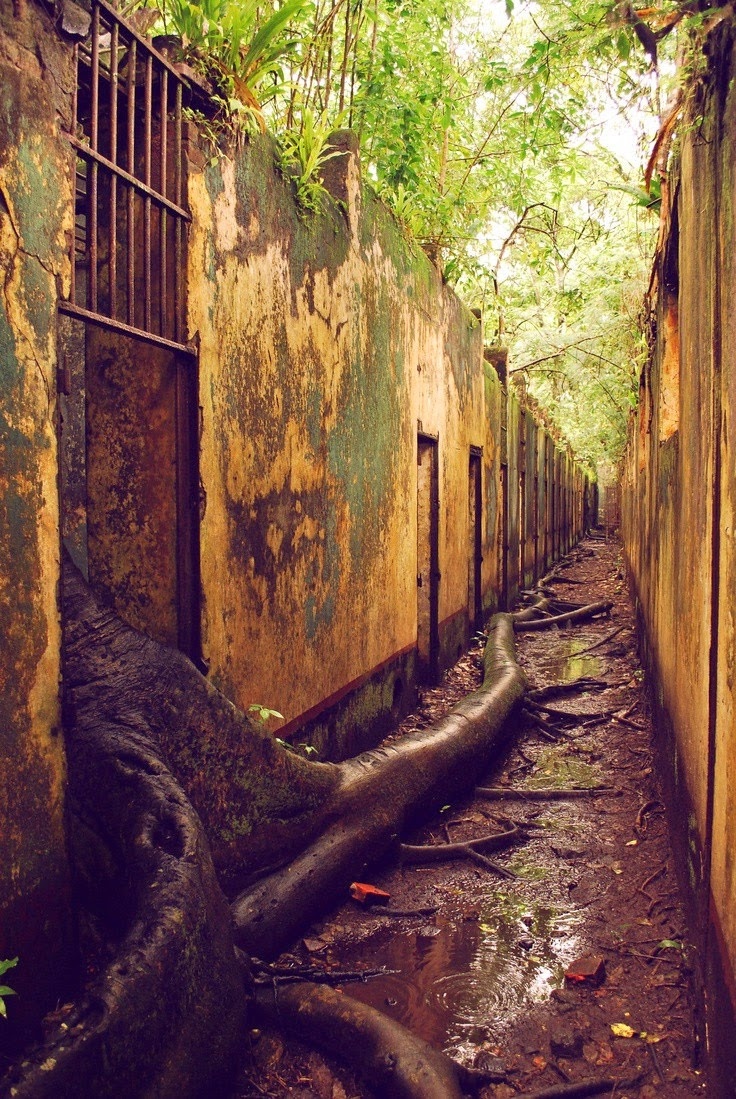 The Trees Are Escaping! Abandoned Prison in French Guiana