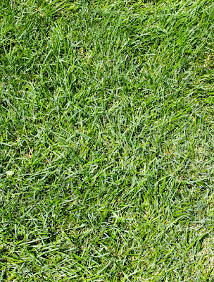 Insane image intended for grass printable