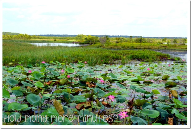 Fogg Dam Conservation Reserve | How Many More Minutes?