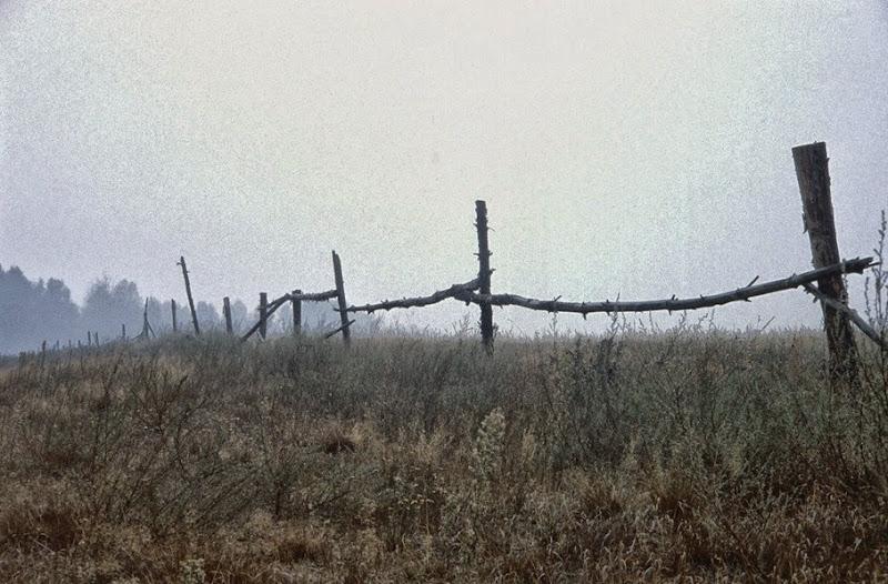 745 campo en la niebla
