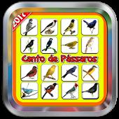 App Canto de passaros do brasil APK for Windows Phone