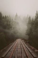 tracksinwoods