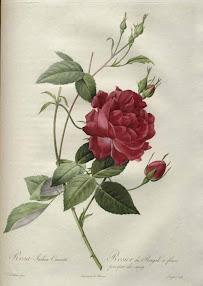 Cover of Aleister Crowley's Book Rosa Decidua