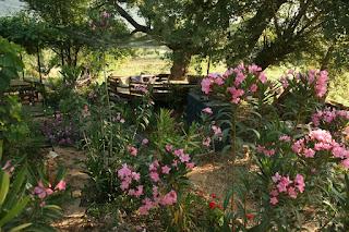 Eflatun-bahçe 148