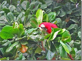 passo-do-lontra-pesca-arara-vermelha