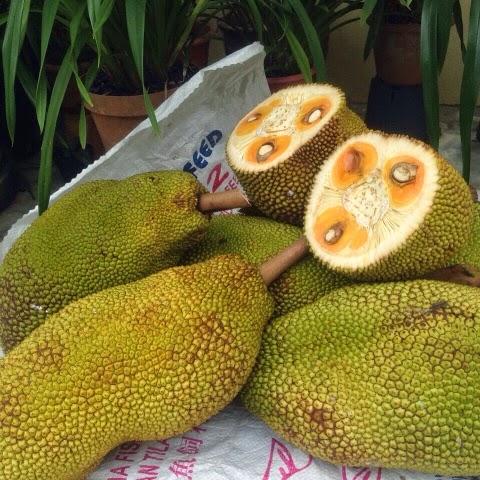 buah nangka, nangka madu, ulat, nangka