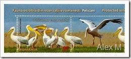2061_3-60lei_Pelican_comun