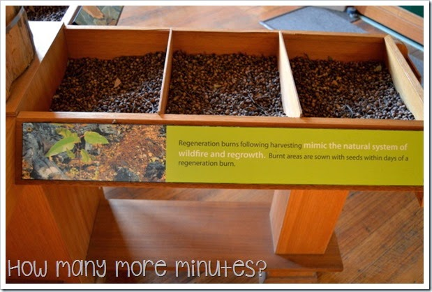 How Many More Minutes? ~ Forest & Heritage Centre at Geeveston, Tasmania