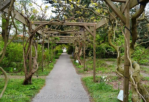 Glória Ishizaka - Hortus Botanicus Leiden - 9