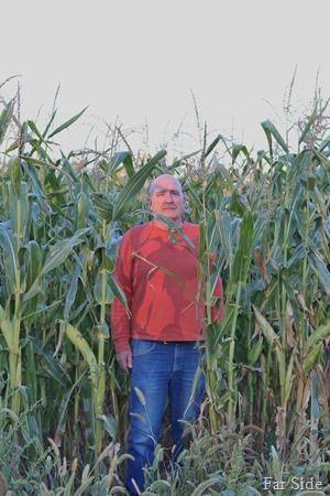 Corn Field August 25 2015