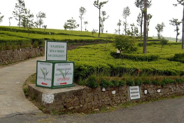 цейлон, шри-ланка, чайные плантации, липтонс сит